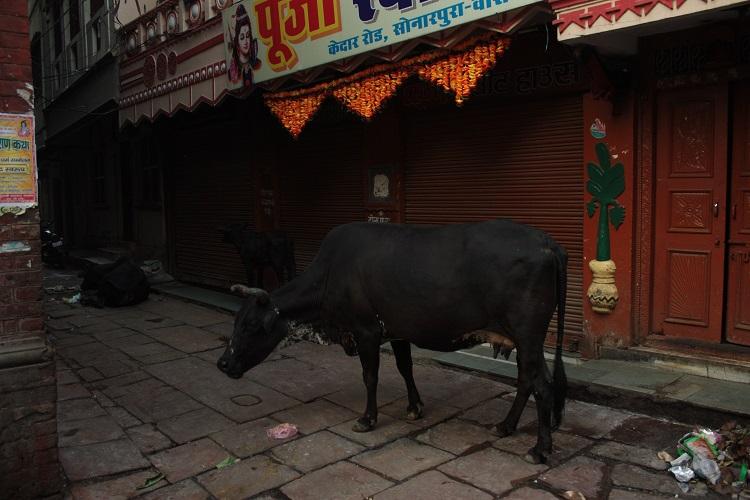 Varanasi vaci