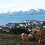 Oricat ar parea de mic, Husavik este al doilea oras ca marime din Islanda